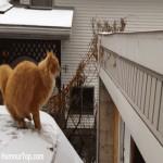 Caida de gato chistosa