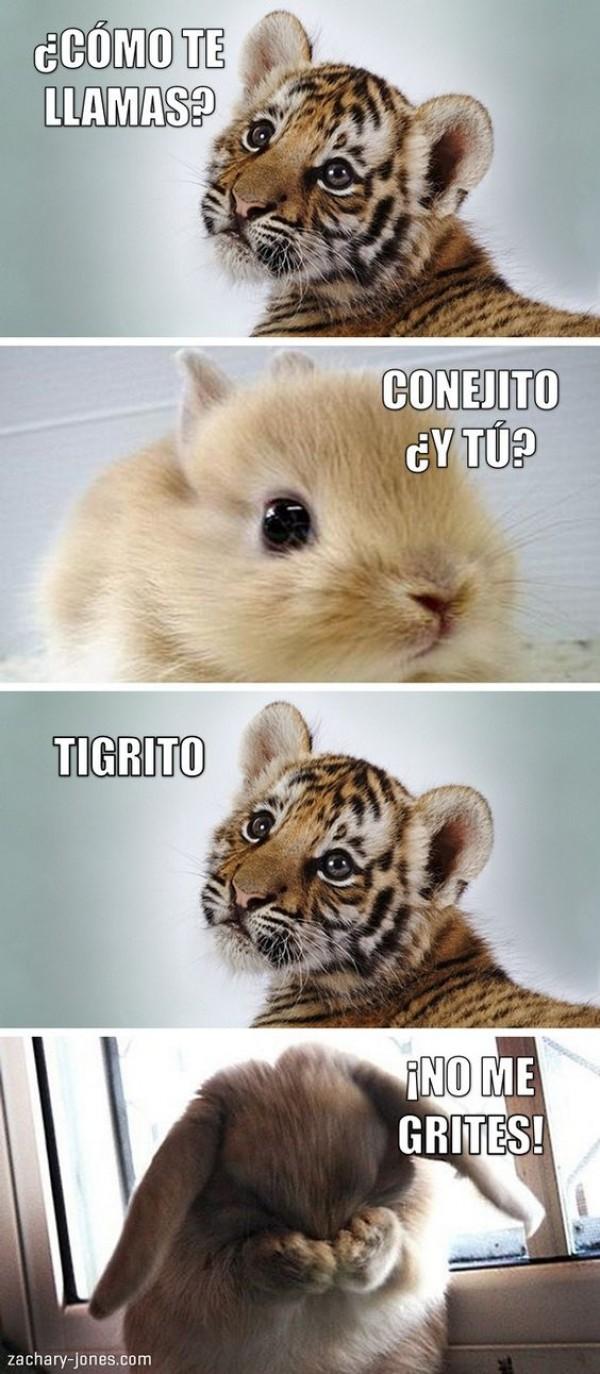 No me grites Tigrito!