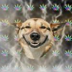 Create Stoner Dog Meme