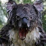 Create Angry Koala Meme