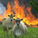 Create Evil Cows Meme