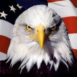 Create Patriotic Eagle Meme
