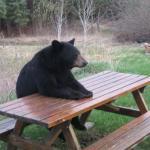 Create Bad Luck Bear Meme