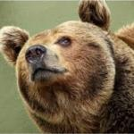 Create Smug Bear Meme