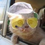 Create Fear And Loathing Cat Meme
